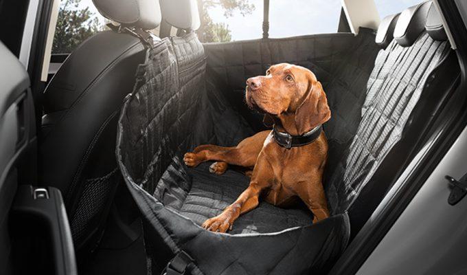 Audi prostirka za psa